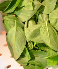 Basil pesto leaves